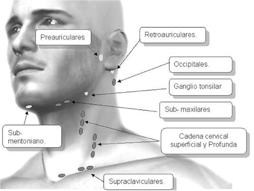 ganglios cuello ubicacion