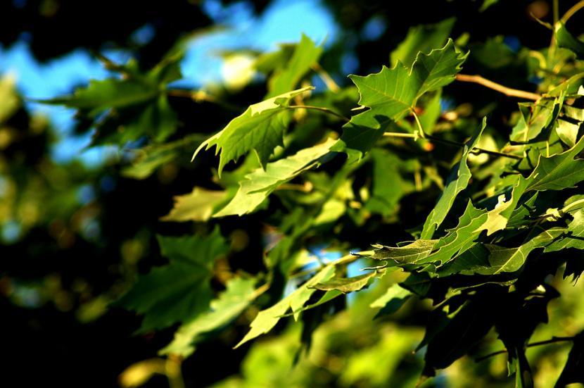 hoja de un árbol
