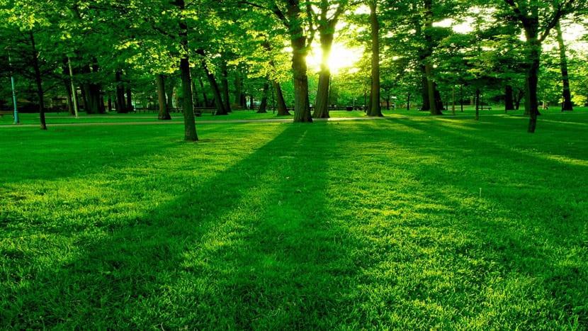 El verde de la hierba es otro ejemplo de colores fríos