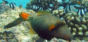 Peces de los arrecifes de coral
