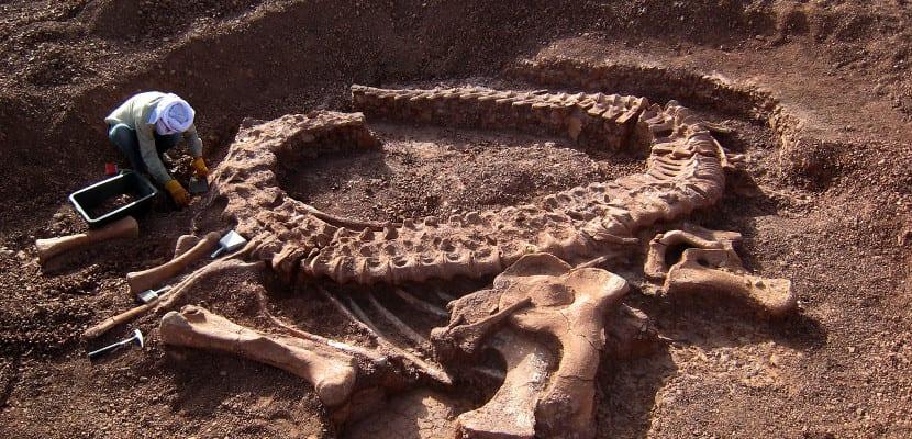 Excavación restos dinosaurio
