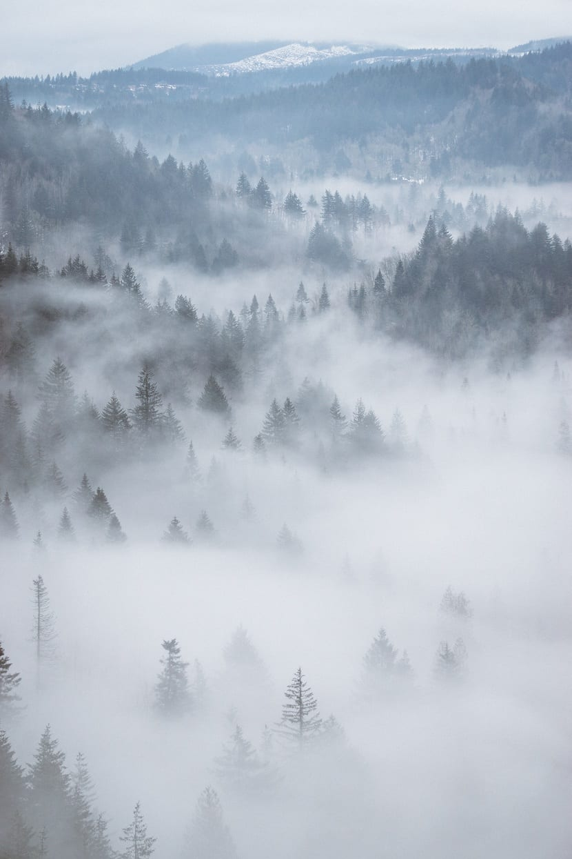 la niebla se forma por vapor de agua condensado