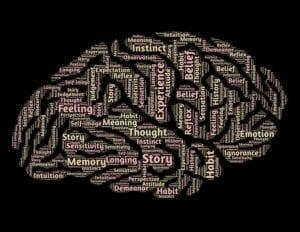 Características de las partes del cerebro
