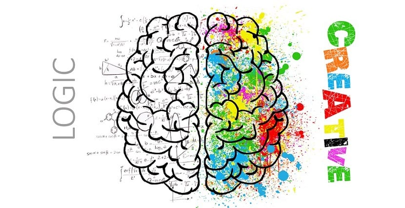 Divisiones del cerebro